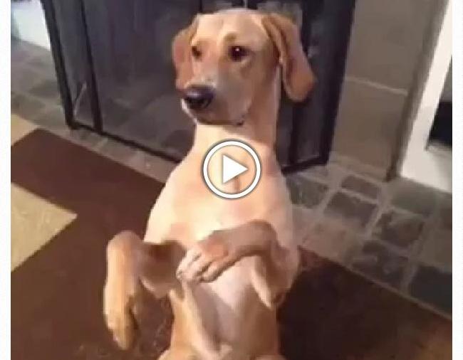 vtipné video zastřelený pes