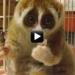 vtipné video medvídek žere rýži