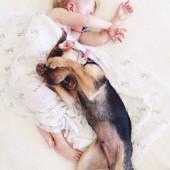 batole a štěne