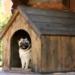 jak vybrat psí boudu